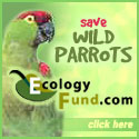 Click to Save Wild Parrots for FREE! CLICK HERE!